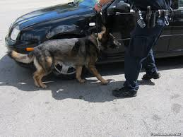 Image result for canine sniffing auto