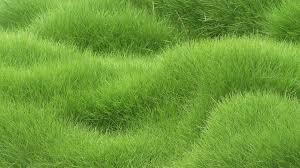 grass field texture. 3840x2160 Wallpaper Texture, Grass, Field Grass Texture