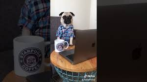 <b>It's time for Coffee</b> - Viral TikTok Video - YouTube