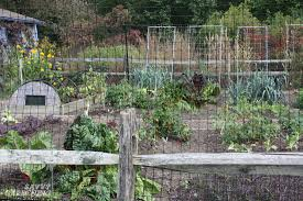 how to keep deer out of your garden. Deer Proof Gardens 4 Sure Fire Ways To Keep Out Of Your Garden How