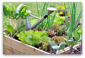 Small Picture Small Vegetable Garden Design Gardening Ideas