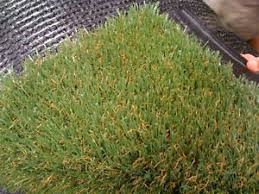 Artificial turf Golf Details About Artificial Turf Grass Synthetic Grass Pet Friendly Turf Value Turf St Basf Plastics Portal Artificial Turf Grass Synthetic Grass Pet Friendly Turf Value