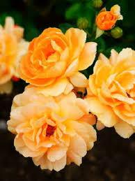 Myra Lynch Obituary - Latrobe, Pennsylvania , Hartman-Graziano Funeral Home  Inc.   Tribute Arcive