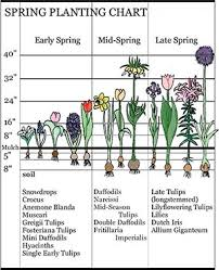 Bloom Time Landscaping With Early Spring Bulbs