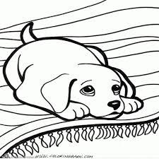 Kleurplaten Honden Chihuahua