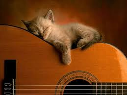 cute kittens sleeping on pianos. Beautiful Cute Admin Pictures 13 Cats Sleeping Intended Cute Kittens Sleeping On Pianos N