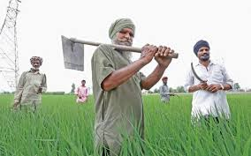 Image result for punjab rice farming problems