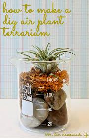 how to make a diy air plant terrarium dear handmade life regarding diy idea 0