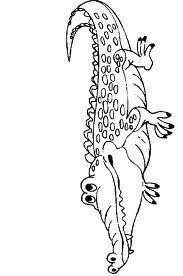 84 Beste Afbeeldingen Van Krokodillen Preschool Kindergarten En