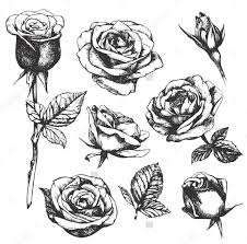 Small Picture 20 Drawings Of Roses Free PSD AI EPS Format Document Download