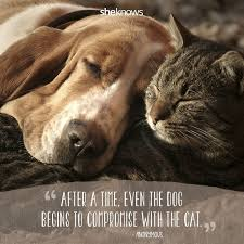 Quotes About Pets And Friendship Unique Gallery Dog And Cat Friendship Quotes Best Romantic Quotes