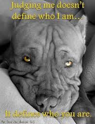 Pitbull Quotes 26 Amazing 24 Best Pit Bulls Images On Pinterest Pit Bulls Pit Bull And