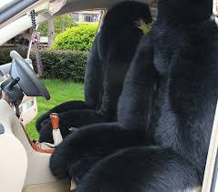 black sheepskin seat covers 1380 best cars images on american muscle cars antique of black