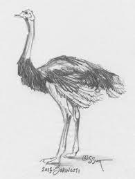 Sandy Scott Art 504 In The Studio Birds Classification