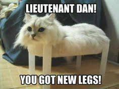 LOL Catz on Pinterest | Cat Memes, Cat and Kitty via Relatably.com
