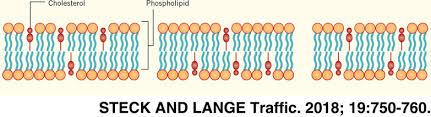 transverse distribution of plasma