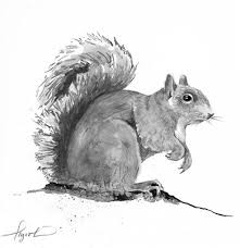 Grey Squirrel Age Chart The Sociable Gray Squirrel The Aggressive Red Squirrel