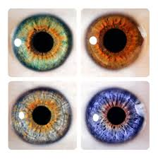 Iris Color Chart Iris Color Chart 4