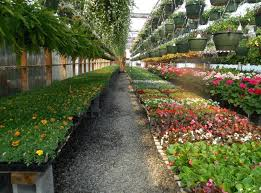 the 40 top plant nurseries in the us