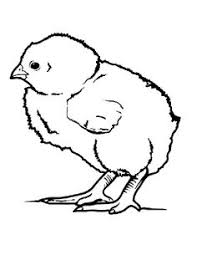 Small Picture Hatching Chicken Egg Coloring Page Hatching chickens and Easter