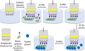 A dip-and-read optical aptasensor for detection of tau protein |  SpringerLink