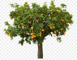 apple tree png 839 682