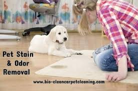 clean pet stain how to clean pet stain and odor from carpet clean dog urine stain