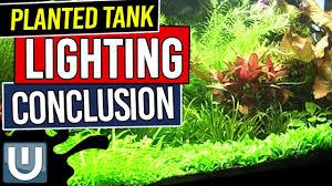 Light Requirement For Planted Aquarium Planted Tank Lighting Conclusions Planted Aquarium Lighting Guide Part 8