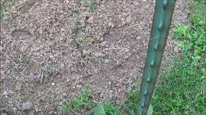Deer Proof Electric Fence Design Cheap Easy And Effective Deer Fencing For Your Garden