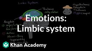 Emotion Code Flow Chart Pdf Limbic System Structure And Function Emotion Video