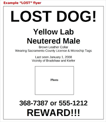 Lost Pet Flyer Maker Impressive Lost Dog Template Cat Flyer Found Poster Create By With Word Maker