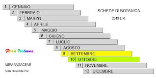 Scilla obtusifolia [Scilla a foglie ottuse] - Flora Italiana