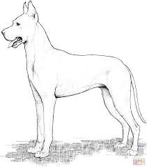 Nice Dog Coloring Pages Dogs Free Abbykerrink Dog Coloring Pages