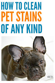how to clean pet stains stainremoval stains carpetstains cleaning deepcleaning