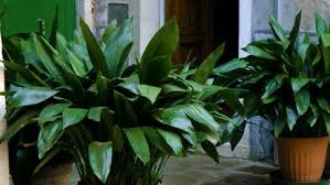 indoor pots best office plants no sunlight