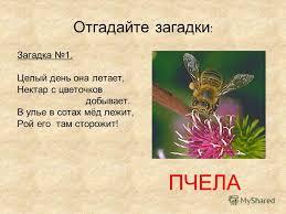 Презентация на тему Курсовая работа Сергиенко И А школа  4 Отгадайте загадки Загадка 1 Целый день она летает Нектар с цветочков добывает В улье в сотах мёд лежит Рой его там сторожит ПЧЕЛА