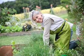 Kitchen Gardening Tips Senior Woman Planting Aromatic Herbs In Kitchen Garden Stock Photo