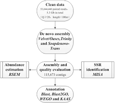 Illumina Sequencing Flow Chart Figure 1 From De Novo Transcriptome Assembly Of Ipomoea Nil