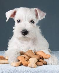 10 best housewarming gifts a gift for fido