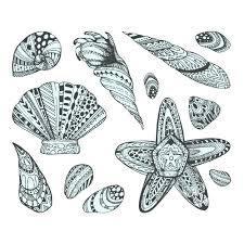 Seashell Design Seashell Design Collection Vector Free Download