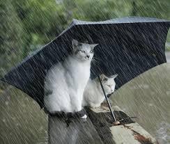 """Résultat de recherche d'images pour """"gifs animés pluie qui tombe"""""""