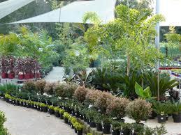 Designer Trees For Small Gardens Services Green Dream