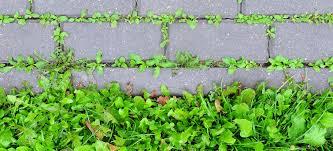 how to stop weeds from growing between