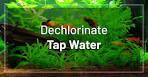 dechlorinate