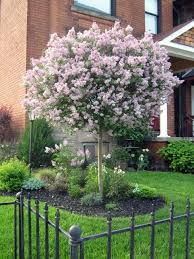 Download Good Trees For Front Yard  Solidaria GardenGood Trees For Backyard