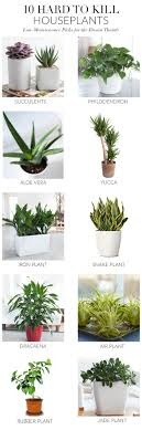 Jade plants need full sun in order to grow properly and need to be drained  well