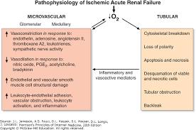 Acute Kidney Injury Harrisons Principles Of Internal