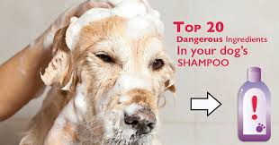 20 Ingredients You Don't Want In Your Dog's Shampoo