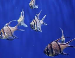 Marine Aquarium Fish Compatibility Chart