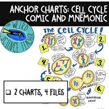 Science Anchor Chart Cell Cycle Comic And Mnemonic Tpt